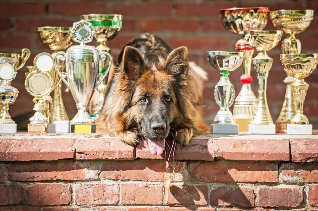 Rollover Pet Food - Rollover is the fuel of Champions