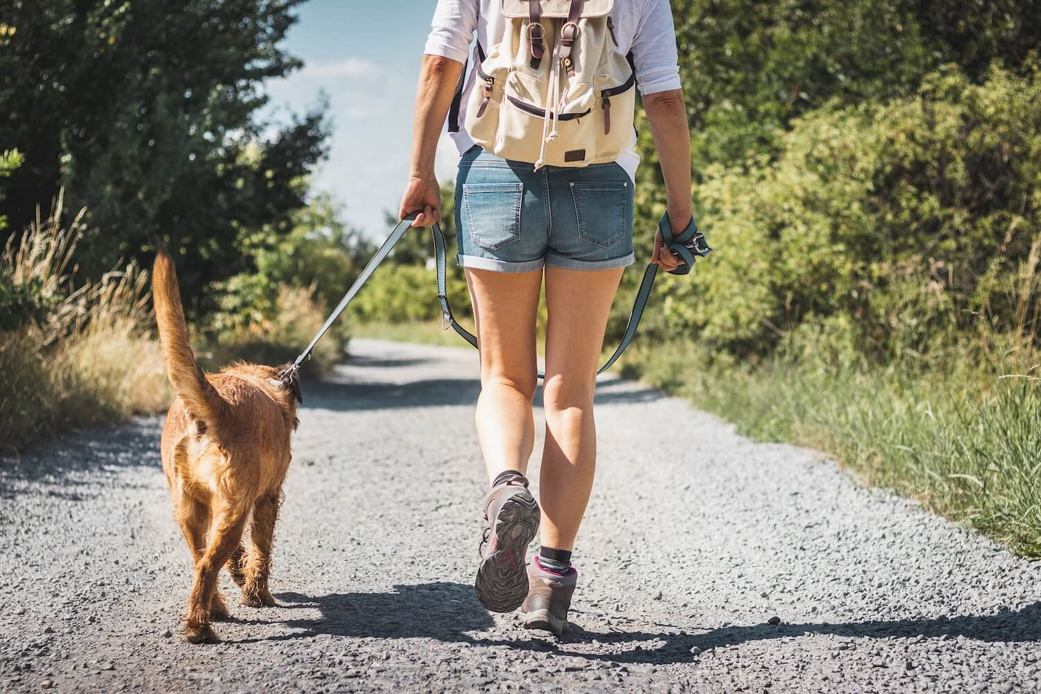 Top Tips for a Successful Hike - Rollover Pet Food Blog